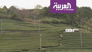 منطقة أوجي شمال مدينة كيوتو منبع الشاي الأخضر الأفضل عالميا