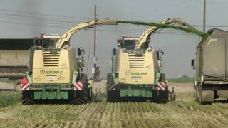 Krone V12 chopping wheat silage /  2 Steam trains chopping side-by-side