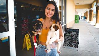 Dog adoption!