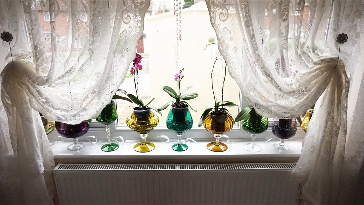 Growing Vanda Type Orchids In Pots Indoors Watering Time And Update You