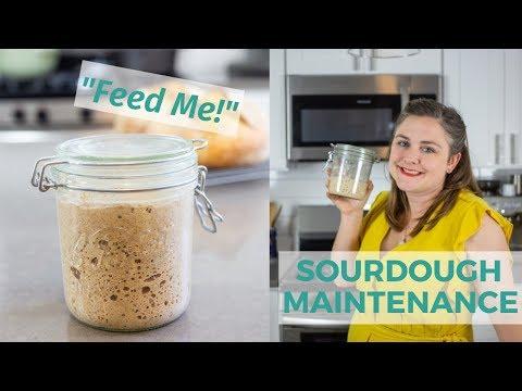 sourdough-starter-maintenance-|-sourdough-for-beginners