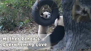 Baby Pandas' Attempt on Escaping From Mom's Cuddle Never Succeeds | iPanda