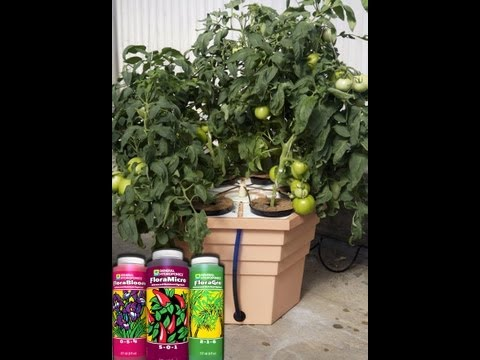 Overgrown Hydroponics Suggests Using General Hydroponics Eco Grower Canada