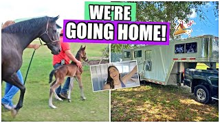 BRINGING THE BABY HOME! | My Pregnant Horse Pt.16