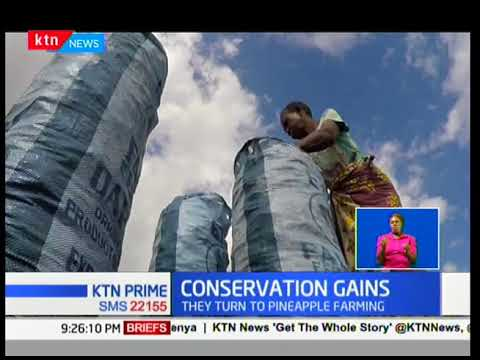 Former charcoal traders in Kilifi county have ventured into alternative sources of revenue earning