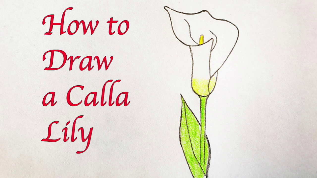 Drawing For Kids How To Draw A Calla Lily Youtube