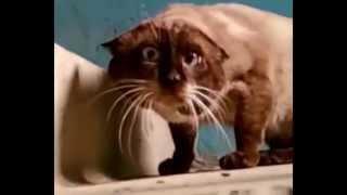 Прикол про кота) Что вы тут делаете,?Что ты тут делаешь?Что тебе снадова