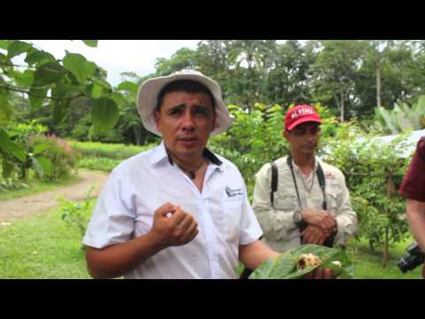 Nonni, Miracle fruit, On the farm, Costa Rica
