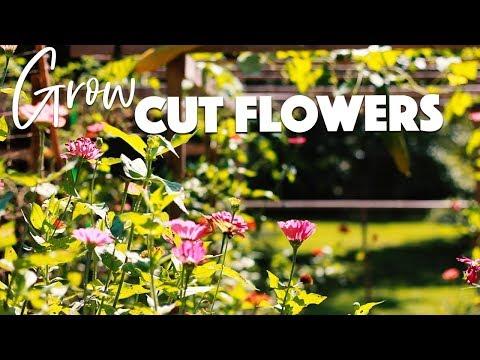 HOW TO GROW A CUT FLOWER GARDEN🌸🌼🌻/A BEAUTIFUL NEST