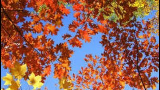What I Love About Fall! Thumbnail