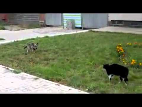 The Dog, the Cat, and the Ugly. Epic fight, Western style!