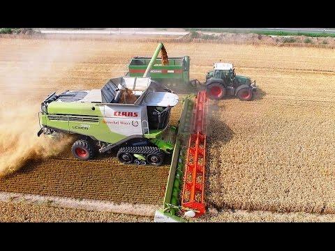 Mähdrescher CLAAS LEXION 780 Terra Trac TT / Weizenernte - biggest combine harvester wheat harvest