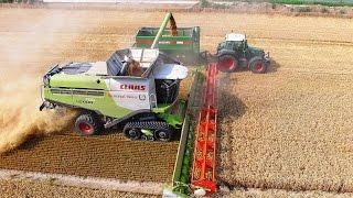 Mähdrescher CLAAS LEXION 780 Terra Trac TT / Weizenernte - biggest harvester wheat harvest
