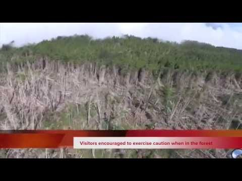 Kula Forest Reserve Reopens