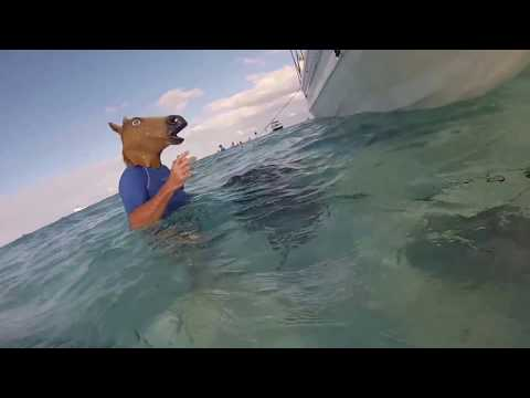 Horsing Around with the Horse Head Mask Down at Stingray City Grand Cayman