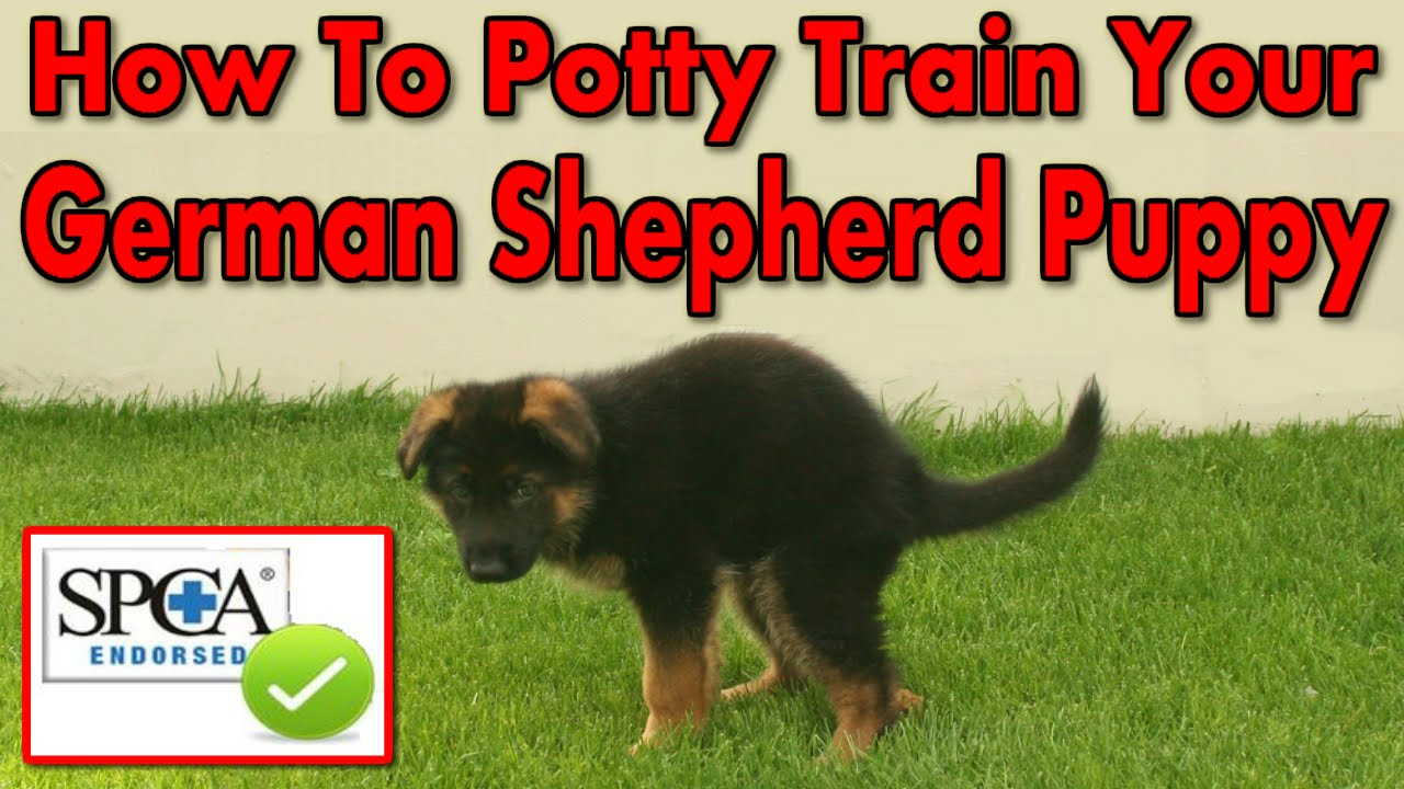 How To Potty Train My German Shepherd Puppy Start Today