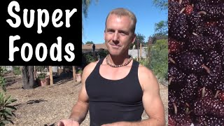 Growing Fruit Trees with SUPERFOODS in the Backyard Garden - Mulberry