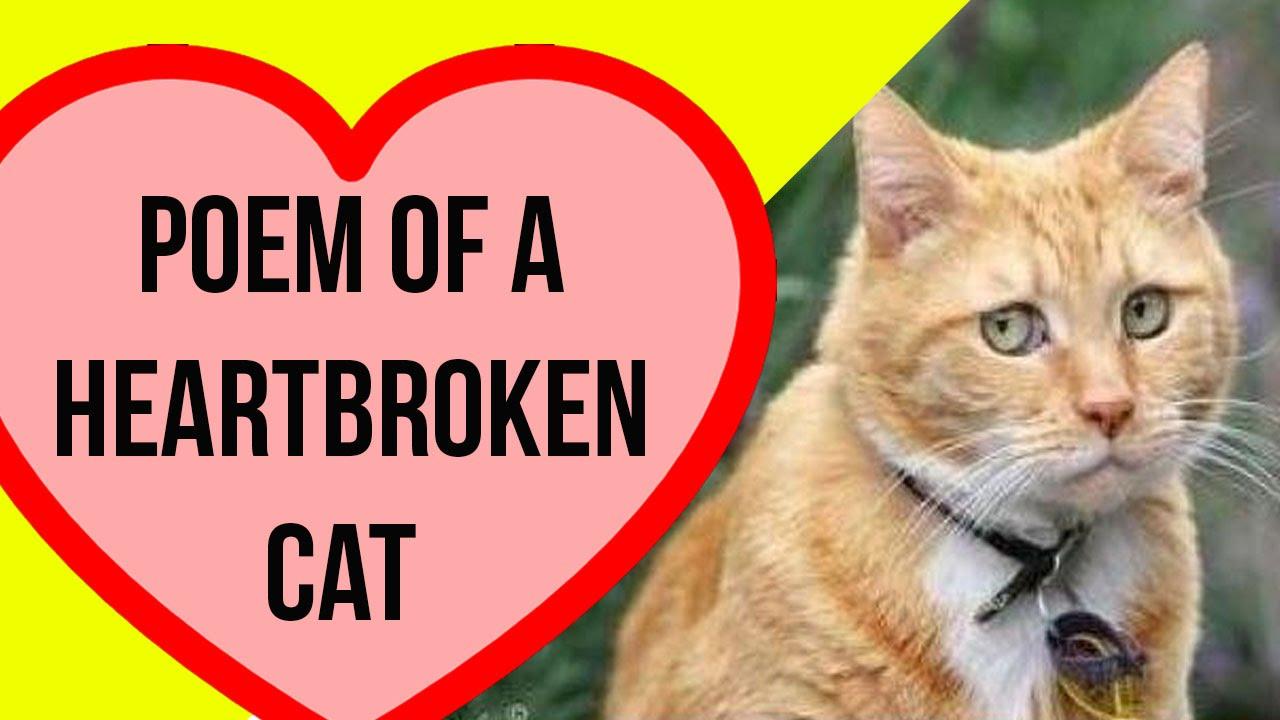 Will Cats Get A Broken Heart