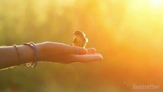 Peer Gynt - La mañana - Edvard Grieg