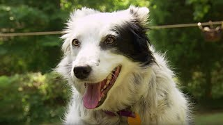 Dog Understands 1022 Words - Super Smart Animals - BBC Earth