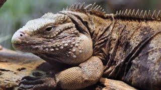 Top 10 Animals in The Sahara Desert - Endangered & Unique Animals