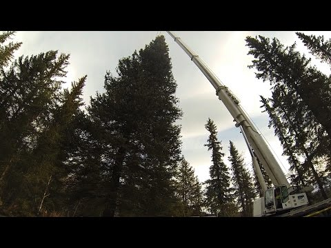 Capitol Christmas tree cut down in felling ceremony near Seward