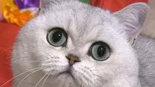 Эти зеленые глаза!.. // Добрыня и Данхилл