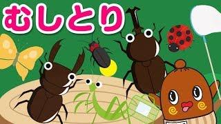 カブトムシにクワガタにカマキリに… いろんな虫、昆虫をつかまえるよ! ...