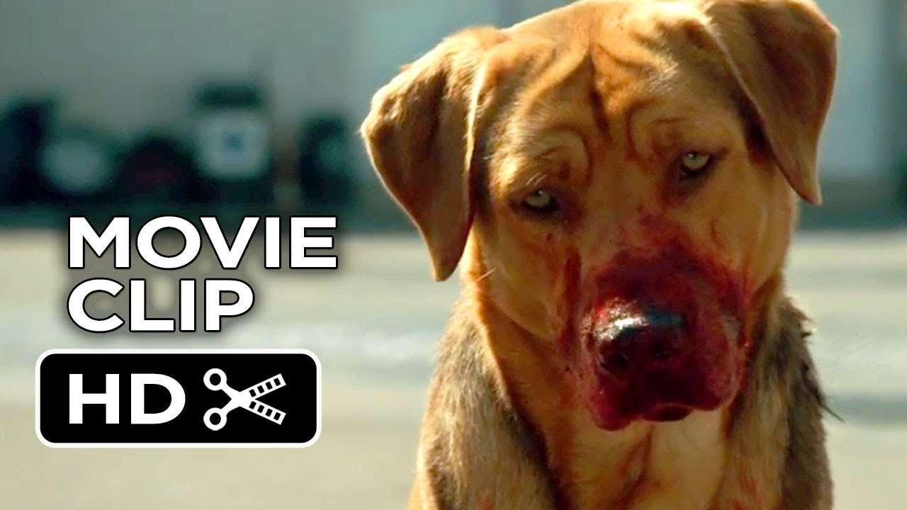 white god movie clip - dog pack (2014) - drama hd - youtube