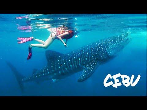Cebu, Philippines - Bohol & Moalboal Adventures!