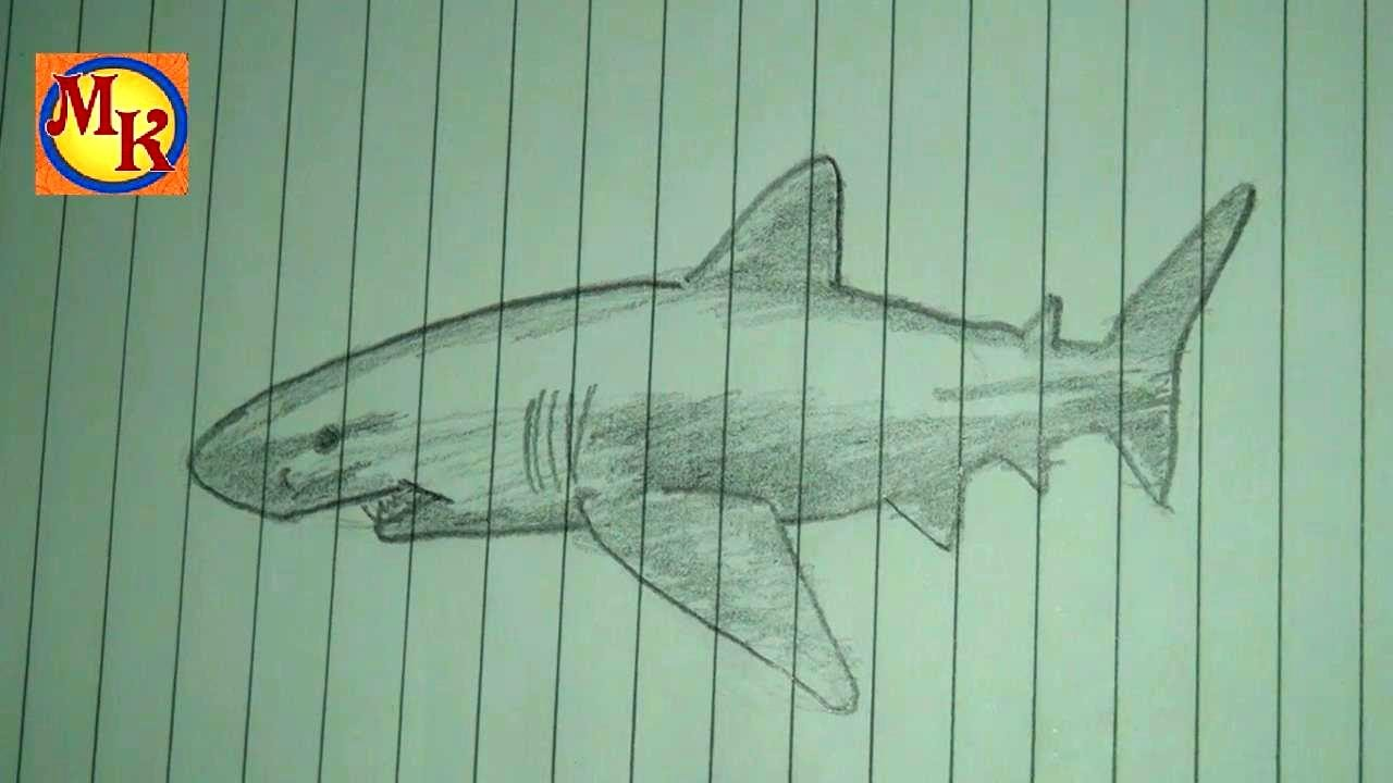 cara menggambar ikan hiu - YouTube