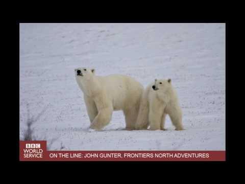 BBC World News Reports on Hudson Bay Polar Bears