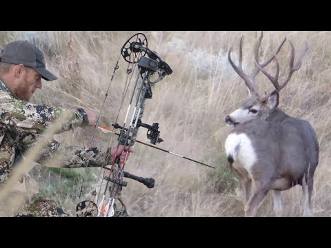 Bow Hunting Mule Deer|Public Land Spot and Stalk with Dan Pickar