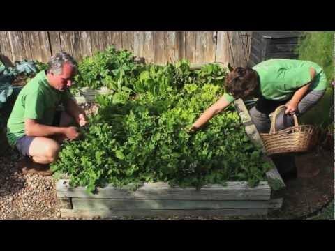Green Corn Project