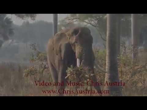 The Wildlife Of Uganda, Rwanda, And Ethiopia