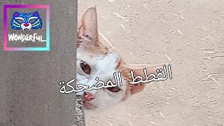 Funny Cats Cute