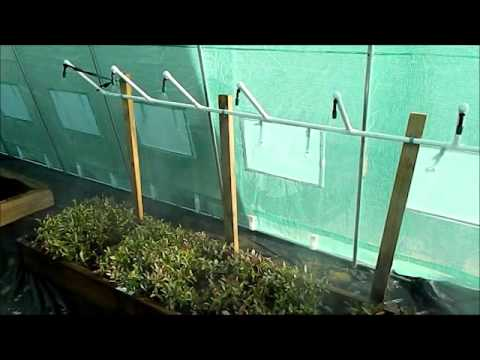 Automatic Plant Cutting Misting System