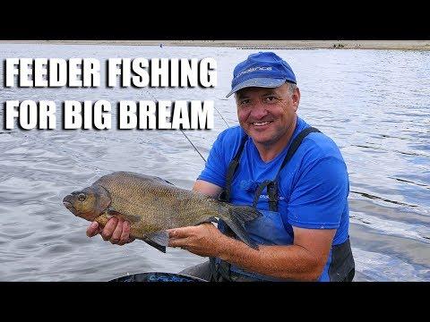 Feeder Fishing For Big Bream