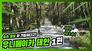 [4k] 자연과 함께 숲에서 캠핑을 한다고? 우니메이카…