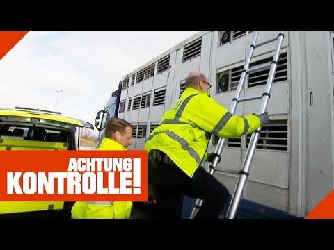 Viehtransporter in Polizeikontrolle: Ist der LKW ordnungsgemäß?   Achtung Kontrolle   kabel eins