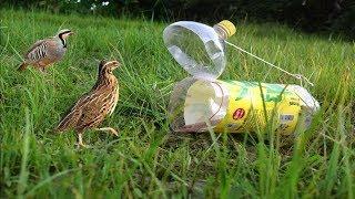 Plastik Şişe İle Akıllıca Tuzak Kuran Çocuk