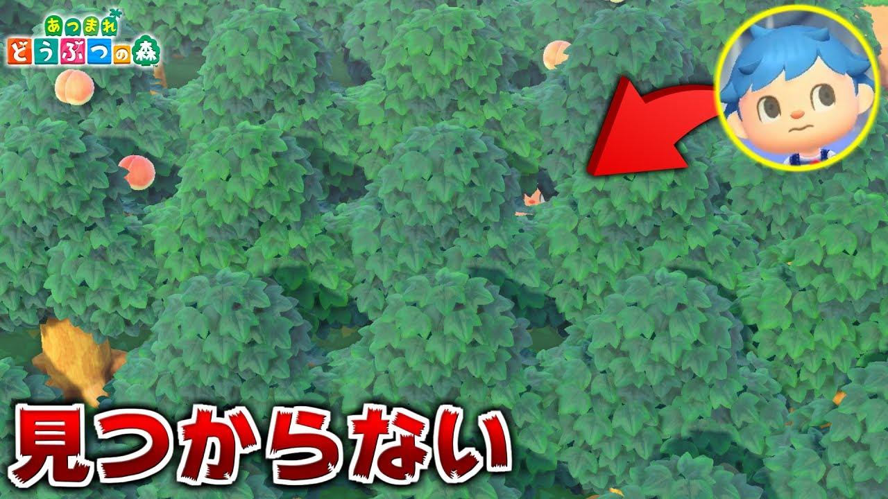 島全体に木しか植えられてない島でかくれんぼしたら無敵説【あつ森】【あつまれどうぶつの森検証】