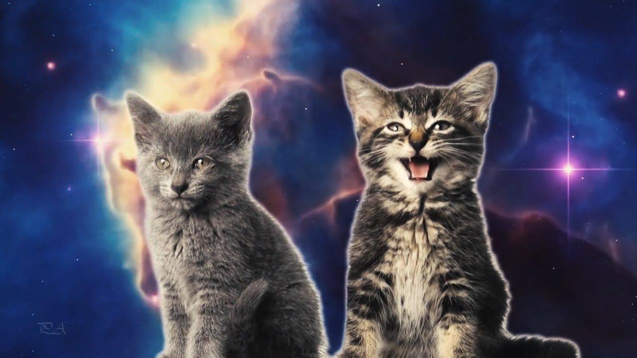 Картинки кот в космосе