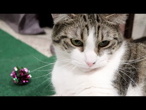 Boo Day 143 - Mylar Balls And Crunchies In The Circuit - Training And Socializing A Feral Cat