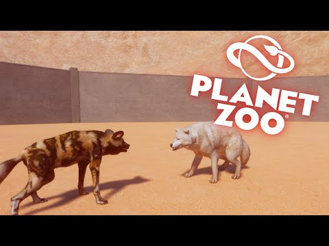 10 MINUTE MATCH BETWEEN 4 WILD DOGS AND 4 ARCTIC WOLVES| Planet Zoo |