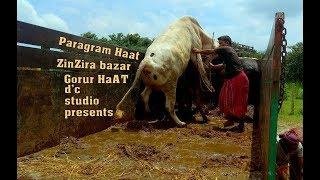 510 | See What Happened | Unloading Bulls | Paragram Haat | ZinZira bazar Gorur HaAt 2017