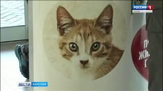 Сбор средств в пользу первого петрозаводского общественного приюта для животных