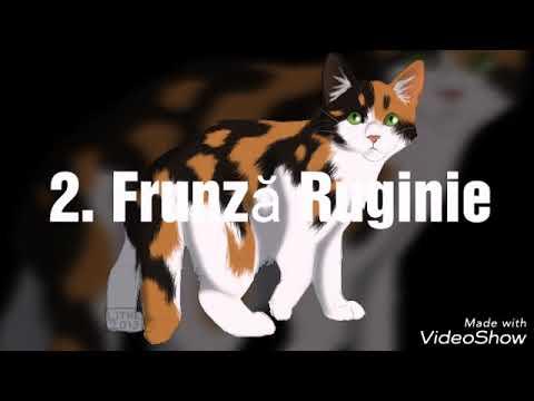 Cele Mai Dragute Imagini Cu Pisicile Războinice Youtube