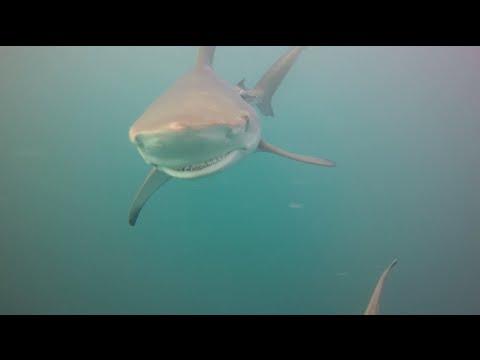 I AM WATER Intern Chloe freediving with sharks