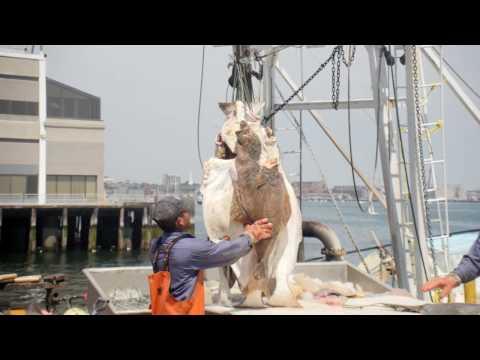 Nagle Fish Company Receives A Shipment At The Boston Fish Pier